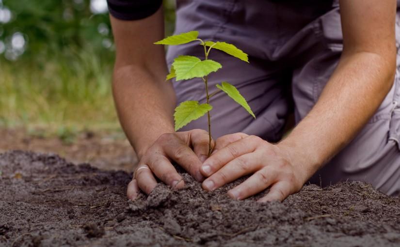 Защо ви е нужно почистване на дворове и засаждане на дървета